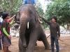 Chiang Mai - Baan Chang elephant sanctuary